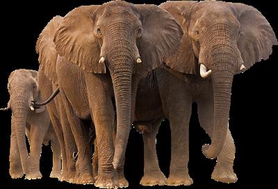 Elefant Porn Tube