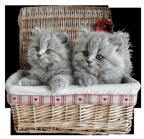 Tubes de chats